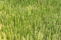 Plantas de deserto Fotografia de Stock