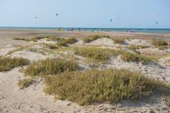 Plantas de deserto em dunas de areia com os surfistas do papagaio na praia tropical Fotos de Stock Royalty Free