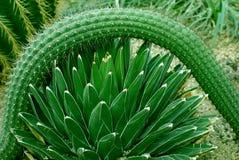 Plantas de desierto Imagenes de archivo