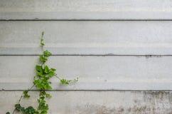 Plantas de escalada Imagem de Stock Royalty Free