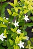 Plantas de florescência Fotos de Stock