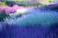 Plantas de florescência - ajardinando Imagens de Stock Royalty Free
