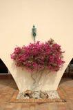 Plantas de florescência bonitas sob a parede Fotografia de Stock Royalty Free