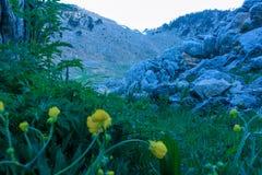 Plantas de florescência da floresta em um esclarecimento na frente do fundo natural das rochas foto de stock royalty free