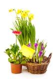 Plantas de florescência da mola Foto de Stock Royalty Free