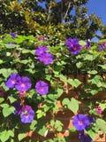 Plantas de florescência do sul bonitas fotos de stock