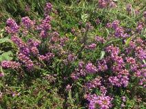 Plantas de florescência do sul bonitas imagem de stock