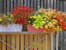 Plantas de florescência em um balcão fotos de stock royalty free