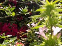Plantas de florescência que incandescem na luz solar Fotos de Stock