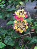 Plantas de Flowerings Imágenes de archivo libres de regalías
