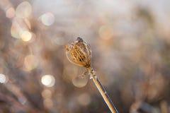 Plantas de hielo Fotos de archivo libres de regalías