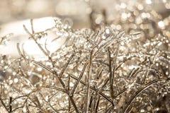 Plantas de hielo Fotografía de archivo