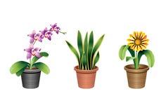 Plantas de interior del hogar y de la oficina stock de ilustración