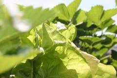 Plantas de jardín el día soleado imagenes de archivo