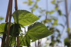 Plantas de jardín el día soleado foto de archivo libre de regalías