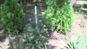 Plantas de jardín en el parque búlgaro Rosinets almacen de metraje de vídeo