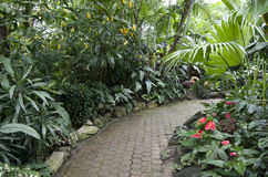 Plantas de jardín subtropicales Fotografía de archivo libre de regalías