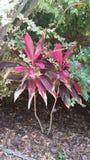 Plantas de jardim Fotografia de Stock