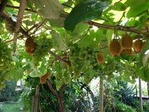 Plantas de jardim Imagem de Stock