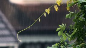 Plantas de jardim e casas verdes da cidade sob a chuva, clima do risco da inundação, outono vídeos de arquivo