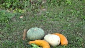 Plantas de jardim e vegetais recentemente colhidos no prado Inclinação para baixo 4K filme