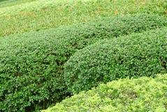 Plantas de jardinagem verdes exteriores do close up no parque Imagens de Stock