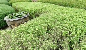 Plantas de jardinagem verdes exteriores do close up no parque Imagem de Stock