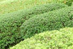 Plantas de jardinagem verdes exteriores do close up no parque Fotografia de Stock