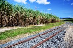 Plantas de la caña de azúcar y vías del tren fotos de archivo