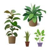 Plantas de la casa libre illustration