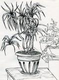 Plantas de la casa Fotografía de archivo libre de regalías