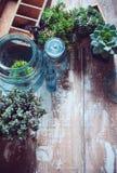 Plantas de la casa Imagen de archivo libre de regalías