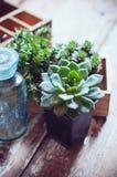 Plantas de la casa Fotografía de archivo