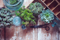 Plantas de la casa Foto de archivo