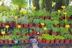 Plantas de la casa Foto de archivo libre de regalías