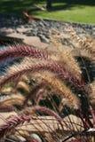 Plantas de la charca Foto de archivo libre de regalías