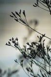 Plantas de la charca Fotografía de archivo libre de regalías