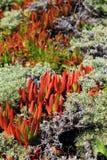 Plantas de la costa oeste Fotografía de archivo libre de regalías