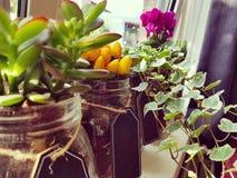 Plantas de la decoración Foto de archivo libre de regalías
