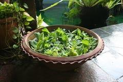 Plantas de la decoración del Balinese Imágenes de archivo libres de regalías
