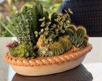 Plantas de la familia de cacto en crisol Imagenes de archivo
