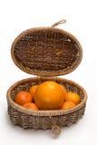 Plantas de la fruta cítrica Imágenes de archivo libres de regalías