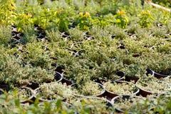 Plantas de la horticultura en potes Cuarto de ni?os del jard?n foto de archivo