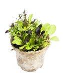 Plantas de la lechuga en crisol Imagen de archivo