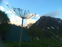 Plantas de la montaña Imágenes de archivo libres de regalías