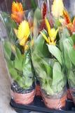 Plantas de la primavera Imagen de archivo libre de regalías
