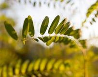 Plantas de la rama con las hojas del verde en la puesta del sol Imagen de archivo