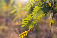 Plantas de la rama con las hojas del verde en la puesta del sol Foto de archivo libre de regalías