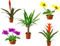 Plantas de la ventana Imágenes de archivo libres de regalías