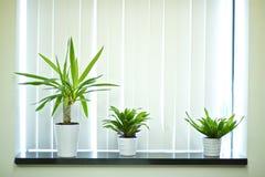 Plantas de la ventana imagen de archivo libre de regalías